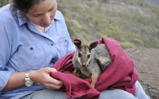 © Australian Wildlife Conservancy