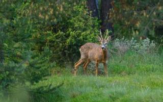 © Rewilding Europe
