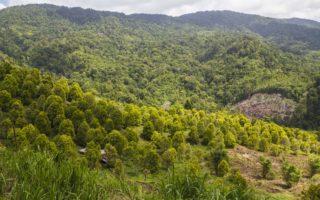 Bogani Nani Wartabone National Park © WCS