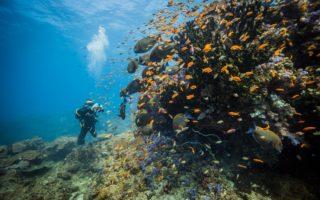 Coral Reef in Benguerra Island © Scott Ramsay/Love Wild Africa