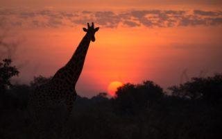 © Kyle de Nobrega / African Parks