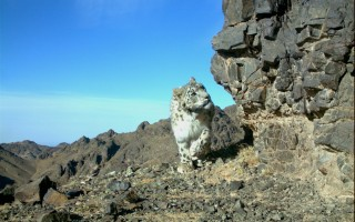 © Snow Leopard Trust