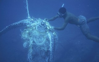 Unsuccessful attempt by a diver to rescue a Leatherback turtle caught in a net © Michel Gunther WWF-Canon