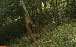 © Wildlife Conservation Society - Indonesia