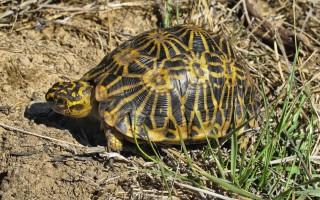 © Turtle Conservancy