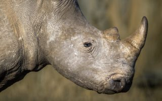 © Neil Aldridge/Rhino Conservation Botswana