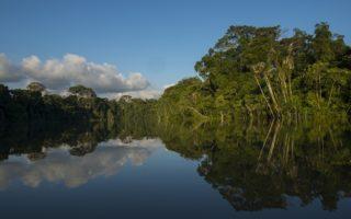 The rainforest along the River Yaguas, Peru © Daniel Rosengren / FZS