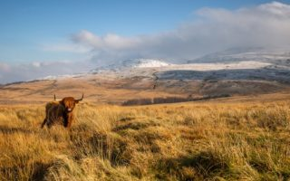 Uplands © Ben Porter/ELP