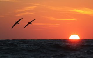 Albatross Sunset @ Dimas Gianuca/BirdLife International