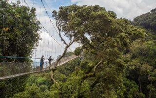 Nyungwe Forest Canopy Walkway, Rwanda © Scott Ramsay