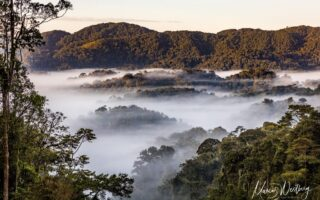 Nyungwe Forest Landscape, Rwanda © Marcus Westberg