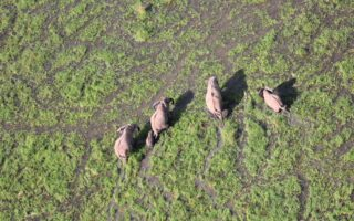 A group of elephants © PAMS Foundation