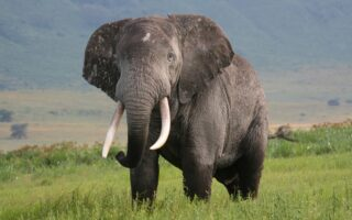 Elephant © PAMS Foundation